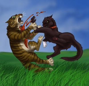 this might sound weird and disgusting...but..making a pic with a cat killing another cat (mostly Scourge killing tigerstar) pic with a lot of blood....