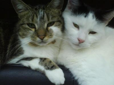 my cats, Bubbles an Tink xxx