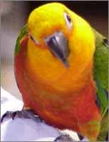 I have one Jenday Conure called Jake!(Below is what a Jenday Conure looks like) And I wish I had a horse/pony/zebra... maybe a dog too.