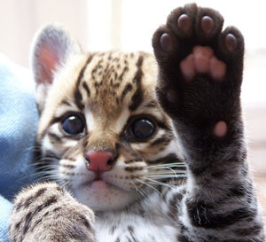 What animal of animals have the cutest babies?