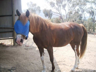 Has A Horse Ever Protected/Saved You?