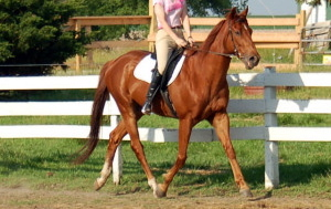 how pretty do u think my horse Chessy out of 10????