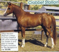What is a good name for this horse?? Please Help!