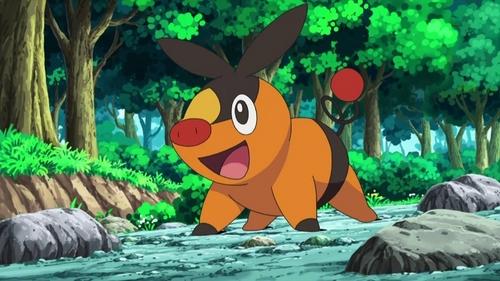 Do あなた like Ash's Tepig?