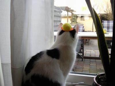 Look. My cat wears a hat.