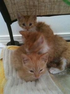 What do আপনি think of my kitties? :3