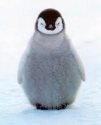 Who likes penguins?