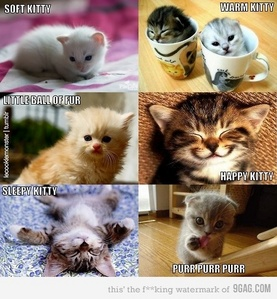Which one is the cutest :3 ?