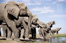 do u think elephant's amor is powerfull?