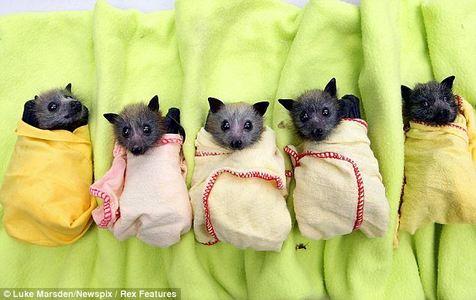 Do oyu like my pet.....bats?