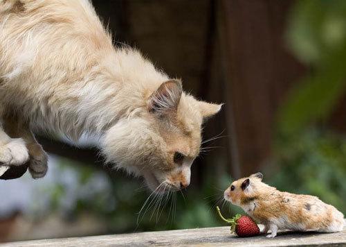 LABLOGOGAR: Fun with Cute Animals