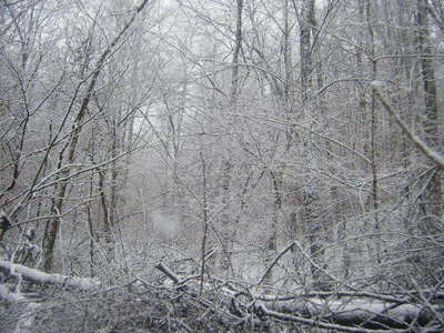 ^___^ Behold my backyard in the winter