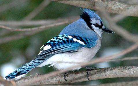Birds Blue Jay's are my favorite.