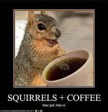 funny squirrel:)