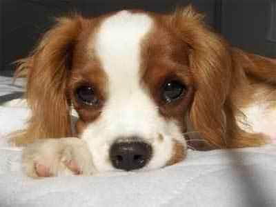 i like dogs :P