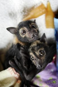 Awww...I'm not a bat hater ^-^! They're not ugly o creepy! I think their one of the cutest things! (Yes I know I'm weird!) lol
