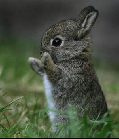 I think this bunny is really cute <3