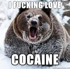 never give cocaine to a برداشت, ریچھ یا this will happend....xD LOL