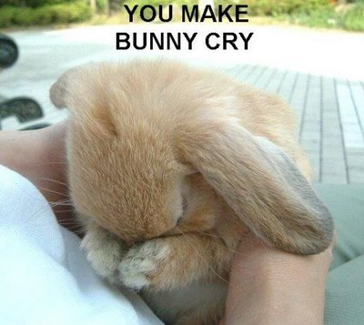 Bunny doesn't win?, then آپ make bunny cry ='(