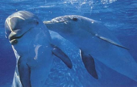 Definatelly dolphin, than koala and कंगेरू, कंगारू and than elephant.