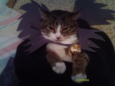 awwww! i can't post a picture of G'wenith, my pure white dragon from my dreams! ah well...here be my cat! i dressed her as Ryuk! (see death note клубы for a picture of Ryuk) her name is Destiny