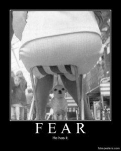 Fear......Poor dog