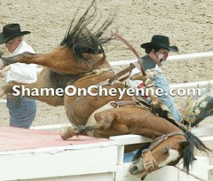 Another victim of Cheyenne Frontier Days rodeo.