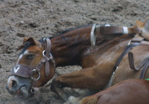 Injured horse at Cheyenne Frontier Days rodeo