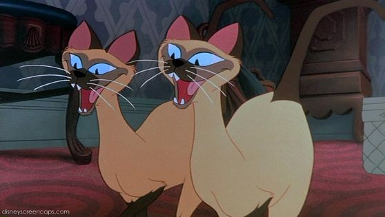 We are siamese if you please!