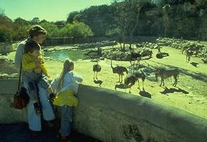 The San Antonio Zoo