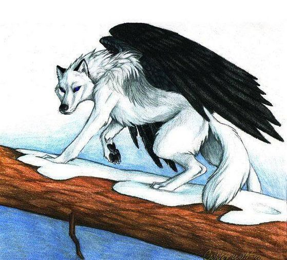 Blood (the young male loup
