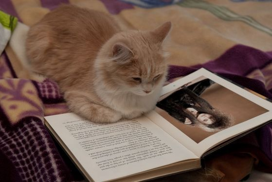 An animagus reads Zanhar's latest novel