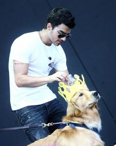 Joe Jonas with Nick Jonas's dog Elvis