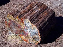 Giving u an idea of petrified wood.