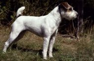 Zilly,Bridgettes Dog!