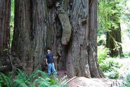 These big old trees attract a lot of attention