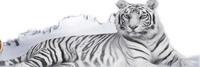 This my new version Taiyoo Tora Taiyoo Tora Zanpakuto/shikai:Taiyoo Tora(Sun Tiger) release [Takak