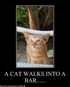 A cat walks into a bar......