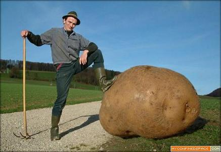 That........is awesome. ALL HAIL THE MIGHTY POTATO