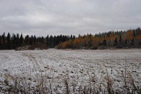 numero dos: बिना सोचे समझे snowy field