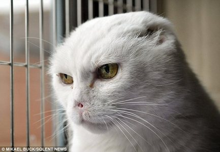 http://www.dailymail.co.uk/news/article-1355548/Cat-looks-like-lord-Voldemort-Harry-Potter-villain-ne