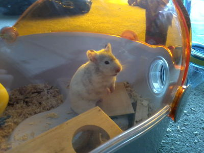 This is my hamster. Just thought I'd post a Rawak picture :P