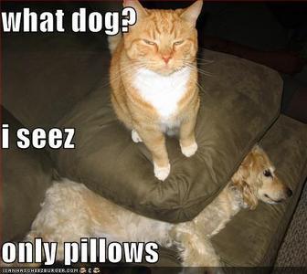 I seez no Accio, only pillows! xD