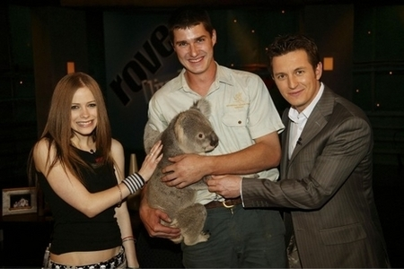 Here Avril with a koala i want a pic of Avril with сойка, джей leno