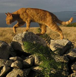 coolio! (btw, that is bramblestorm. go to warriorcats.com and go to e.t.w.o.t.c. then go to clans. i