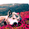 http://www.fanpop.com/spots/house-md-fans/images/15457254/title/stock-lims-icon Yes it sucks BTW Mi