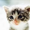 "[url=""http://www.fanpop.com/spots/house-md-fans/images/15766279/title/lims-stock-round-2-icon""]Cute K"