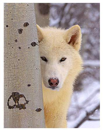 My name is Emma and my wolf name is SnowQueen ;)