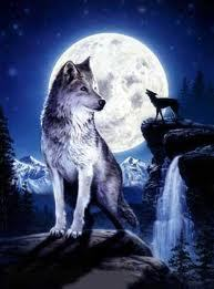 my name is deeps and my wolf name is enchanta i am a female  my fur colors are brown and white and my