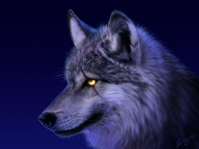 amazing wolves ur all accepted! and heres  midnight mystery's wolf shes also accepted